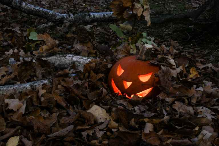 photo of jack o lantern covered with dry leaves